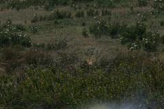 Kosciuszko-1